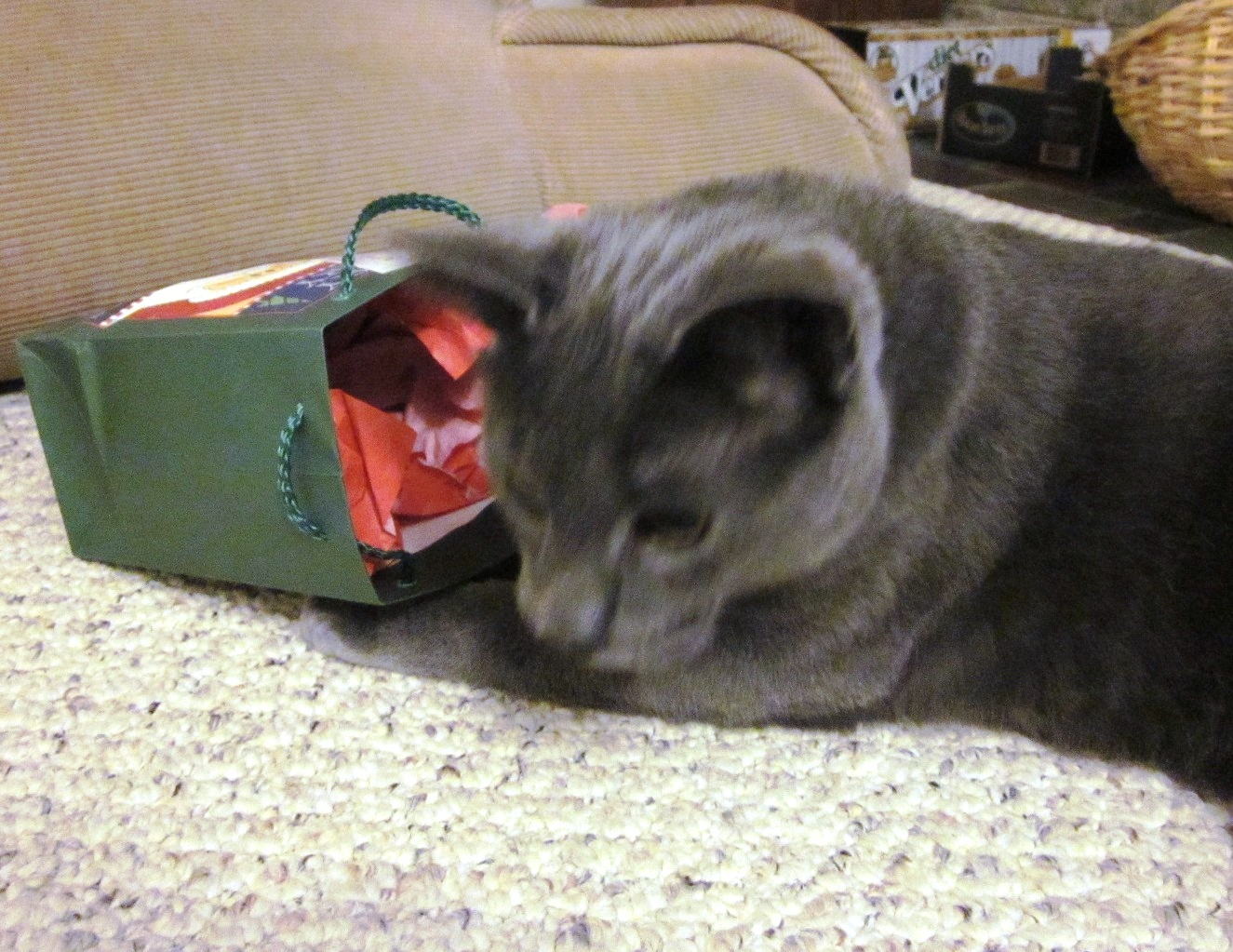 A Bag! And Crunchy Paper! And another Bag! And something inside THAT!